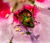Macro view of beetle