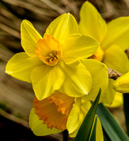 2015-Apr-05_April Flowers_DSC_6082